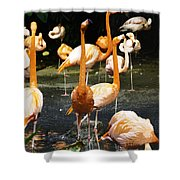 Oil Painting - A Number Of Flamingos With Their Heads Held High Inside The Jurong Bird Park Shower Curtain