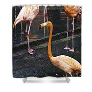 Oil Painting - Focus On A Single Flamingo Inside The Jurong Bird Park Shower Curtain