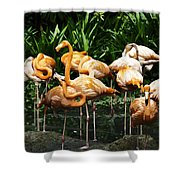 Oil Painting - Number Of Flamingos Inside The Jurong Bird Park Shower Curtain