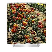 Oil Painting - Red And Yellow Tulips Inside The Tulip Garden In Srinagar Shower Curtain