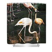 Oil Painting - The Head Of A Flamingo Under Water In The Jurong Bird Park In Singapore Shower Curtain