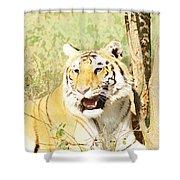 Oil Painting - An Alert Tiger Shower Curtain