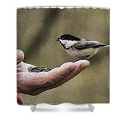 Oil Painting Black-capped Chickadee  Shower Curtain