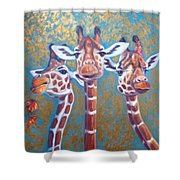 Oil Painting Of Three Gorgeous Giraffes Shower Curtain