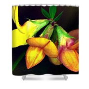 Yellow And Orange Trefoil  Shower Curtain