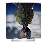 Oiled Kelp From Exxon Valdez Spill Shower Curtain