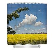 Oilseed Rape Field Against Blue Sky Shower Curtain