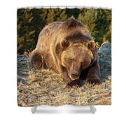 Ok -  It's Your Trail Shower Curtain