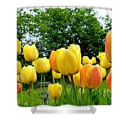 Okanagan Valley Tulips Shower Curtain