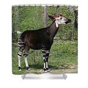 Okapi Shower Curtain