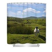 Okehampton Sheep  Shower Curtain