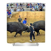 Okinawan Culture Bull Versus Bull Okinawan Bullfighting Shower Curtain