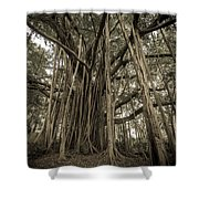 Old Banyan Tree Shower Curtain by Adam Romanowicz