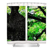Old Barks Diptych - Deciduous Trees Shower Curtain