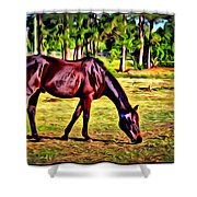 Old Bay Horse Shower Curtain