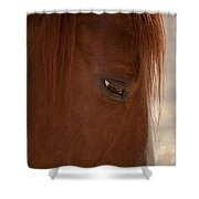 Old Brown Eyes Shower Curtain