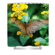Old Butterfly Shower Curtain