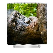 Old Chimp Shower Curtain