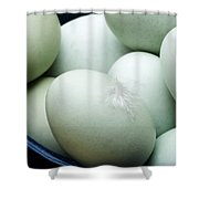 Old Cotswold Legbars Shower Curtain