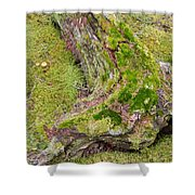 Old Decaying Lichens Moss Covered Taiga Tree Trunk Shower Curtain