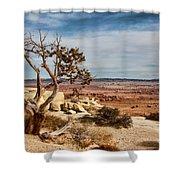 Old Desert Cypress Struggles To Survive Shower Curtain