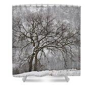 Old Elm Shower Curtain