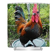 Old English Game Bantam Shower Curtain