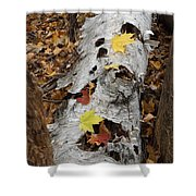 Old Fallen Birch Shower Curtain