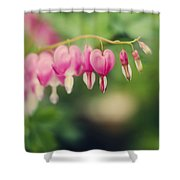 Old Fashioned Bleeding Hearts Shower Curtain