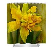 Old Fashioned Daffodil Shower Curtain