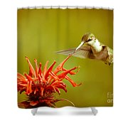 Old Fashioned Hummingbird Shower Curtain