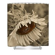 Old Fashioned Sunflower Shower Curtain