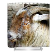 Old Goat Shower Curtain