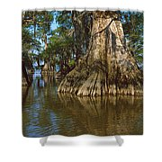 Old-growth Cypresses At Lake Fausse Shower Curtain