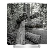 Old Growth Forest Black And White Collection 4 Shower Curtain