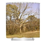 Old Haunted Tree Shower Curtain