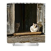 Old Knox Church Cats Shower Curtain