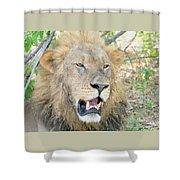 A  Lion Talks Shower Curtain