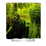 Old Mossy Stump Shower Curtain