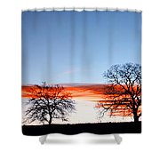 Old Oak Trees On Old Humboldt Road Shower Curtain