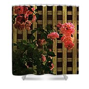 Old Roses, Old Wood Shower Curtain