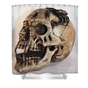 Old Skull With Scorpion On A White Background Shower Curtain