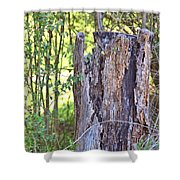 Old Stump Shower Curtain