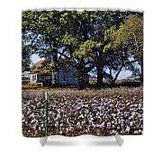 Old Time Farm And Cotton Fields Shower Curtain