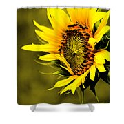 Old Time Sunflower Shower Curtain