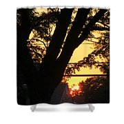 Old Tree And Sunset Shower Curtain