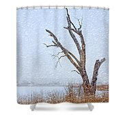 Old Tree In Winter Shower Curtain