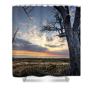 Old Tree Sunset Over Oyster Bay Shower Curtain