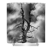 Old Trees Reach For The Sky Shower Curtain