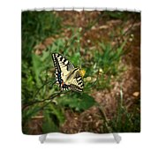 Old World Swallowtail. Montorfano. Cologne Shower Curtain